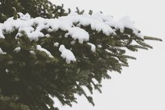 A pine tree covered with snow at Hangang Park, Seoul, South Korea stock image