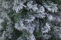 A pine tree covered with snow at Hangang Park, Seoul, South Korea stock photography