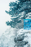 Pine tree covered with snow Stock Image