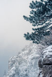 Pine tree covered with snow Royalty Free Stock Images