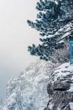 Pine tree covered with snow Royalty Free Stock Photos
