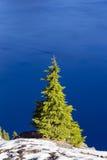 Pine tree, Crater Lake National Park, Oregon Royalty Free Stock Photos