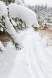 Pine tree  and cross country path Stock Images