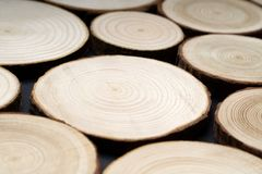 Pine tree cross-sections with annual rings on plane black surface. Lumber piece close-up. Pine tree cross-sections with annual rings on plane black surface stock image