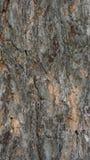 Pine tree crust. Pinus sylvestris tree crust background Stock Images