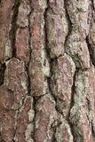 Pine tree crust texture Stock Photos