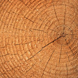 Pine tree cut Stock Photos