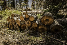 Pine tree cutting into small log Royalty Free Stock Photography