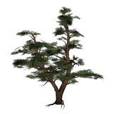 Pine tree - 3D render Stock Photography