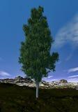 Pine tree - 3D render Royalty Free Stock Photos