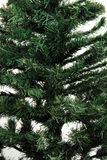 Pine tree detail Royalty Free Stock Photos