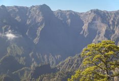 Pine tree detail and mountain. La Palma. Spain Stock Photography