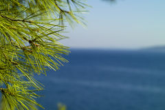 Pine tree detail and seascape. Pine tree leaves detail and seascape royalty free stock images