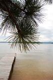 Pine tree and dock Stock Photo