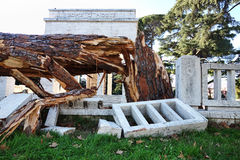 Pine tree down in Rome Stock Photography