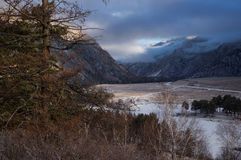 Pine tree and dry grass on the background of a river with a road through a mountain valley at winter dawn in the Altai mountains Stock Images