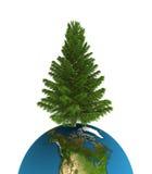Pine tree. On erath sphere Stock Image