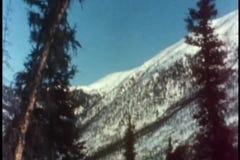 Pine tree falling down stock video