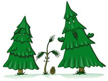 Pine tree family cartoon Royalty Free Stock Photography