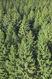 Pine tree forest. Aerial view of an impressive pine tree forest stock images