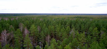 Pine tree forest from above Stock Photo