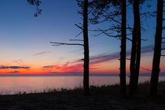 Pine tree forest. Beautiful scenery of the Baltic sea coast with pine trees in foreground after sunset Royalty Free Stock Photo