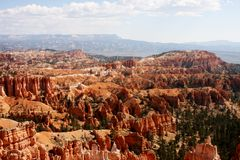 Pine tree forest in Bryce Canyon. Pine tree forest growing in Bryce Canyon stock images