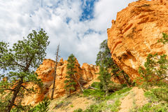 Pine Tree forest at Bryce Canyon National Park. Utah USA Stock Photo