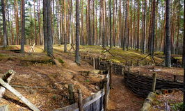 Pine tree forest with catacombs Stock Photos