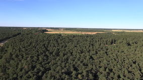Pine tree forest with farmland in background. Aerial footage stock footage