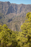 Pine tree forest and mountain. La Palma. Spain Stock Images