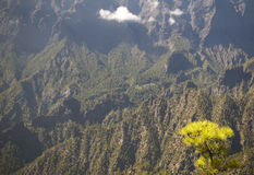 Pine tree forest and mountain. La Palma. Spain Royalty Free Stock Photo