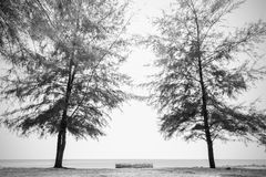 Pine tree forest and old Timber wood  Tropical seaside on over Stock Image