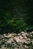 Pine tree forest river flows through the rocks. Beautiful powerf stock photography