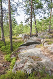 Pine tree forest and rocks Stock Photography