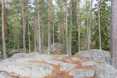 Pine tree forest on top of rocky ground Stock Photography