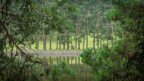 Pine tree forest. Pine tree view, Zlatibor Mountain in Serbia, artificial lake Royalty Free Stock Photo