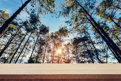 Pine tree forest and wood table plank for product or montage dis Royalty Free Stock Photo