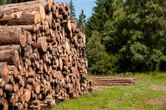 Pine tree forestry exploitation. Stumps and logs. Overexploitation leads to deforestation endangering environment. Stock Image