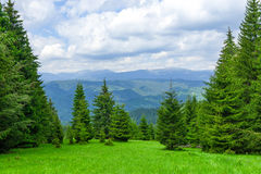 Pine Tree Forrest in the Montains Royalty Free Stock Photography