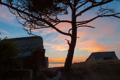 Pine tree between forts. Pine tree on the old destroyed Northern forts background in Liepaja, Latvia on the Baltic sea coast after sunset Stock Photography