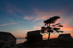 Pine tree between forts. Pine tree on the old destroyed Northern forts background in Liepaja, Latvia on the Baltic sea coast after sunset Royalty Free Stock Image