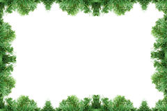 Pine tree frame. Isolated on a white background royalty free stock image
