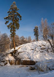 Pine tree at frozen river Royalty Free Stock Photo