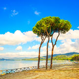 Pine tree group on the beach and sea bay background. Punta Ala, Tuscany, Italy Royalty Free Stock Image