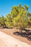 Cyprus Ayia Napa, Cape Greco peninsula, pine tree grove, road on kavo Greco in national forest park Royalty Free Stock Photos