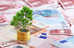 Pine tree growing from pile of coins Stock Images