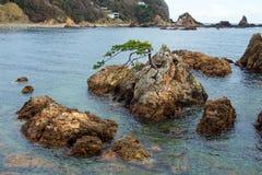Rock and pine of Minami Izu Ose seashore. A pine tree growing on the rock of the Minami Izu Sea is unusual royalty free stock photos