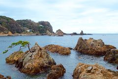 Rock and pine of Minami Izu Ose seashore. A pine tree growing on the rock of the Minami Izu Sea is unusual royalty free stock images