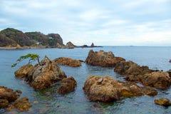 Rock and pine of Minami Izu Ose seashore. A pine tree growing on the rock of the Minami Izu Sea is unusual royalty free stock image
